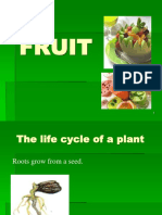 08.FRUIT and SEED k