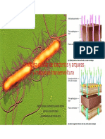 Tema 8 Envoltura Celular Bacteriana