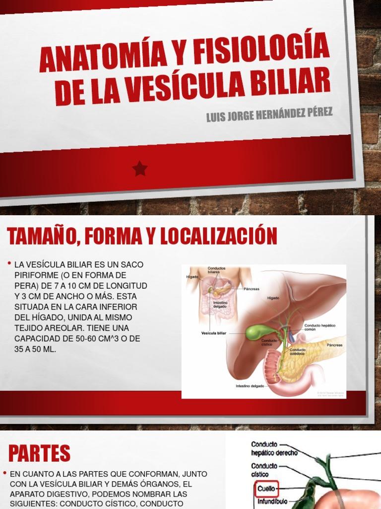 Anatomía y Fisiología de La Vesícula Biliar