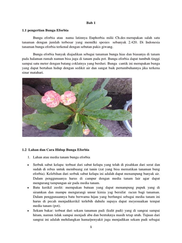 Contoh Makalah Bunga Eforbia