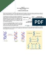 Guía Replicación Del ADN