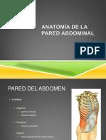 anatomia-20de-20la-20pared-20abdominal-130904165907-