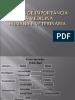 Ácaros de Importância Na Medicina Humana e Veterinária