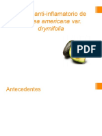 Efecto Anti-Inflamatorio de Persea Americana Var.ppt