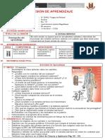 309643260-Sistema-Nervioso-Sesion (1).docx