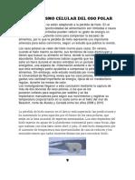 Metabolismo Celular Del Oso Polar