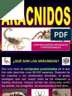 artropodos 2.1