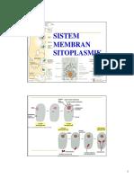 Sistem Endomembran