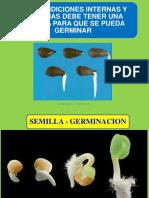 01_GERMINACION-Botánica (3).pdf