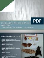 Componente Práctico- Entomologí Agrícola
