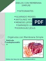 Orgc3a1nulos Con Membrana Simple