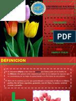 tulipan2terminada-111121031444-phpapp01