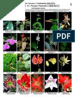 Flores Del Parque Nacional Carrasco