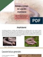 Biología y Ecología Del Suborden Amphisbaenia