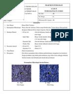 Deskripsi Petrografi Batuan Beku