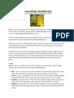 Banana Farming and Production