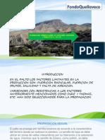 Material Capacitacion Palto.pptx