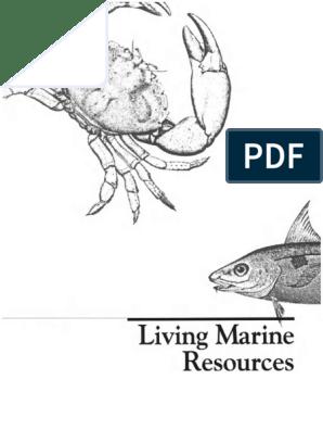 Carp Fishing Feeder Bait Cage Fishing Trap with Lead Sinker Fishing Tackle ji zh