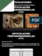 Articulaciones. Articulación Témporomandibular 2017.
