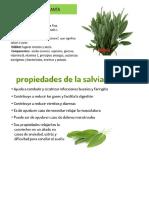 yerbas medicinales.docx