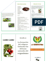 tripticocamucamu-121112220653-phpapp01.pdf