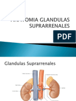 2 Anatomia Glandulas Suprarrenales (1)