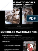 Músculos Masticadores. Músculos Que Mueven La Mandíbula y Fijan El Hioides. Músculos Cutáneos