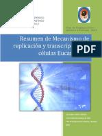 Mecanismo de  replicación y Transcripcion en eucariontes.docx