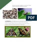 Insectos Que Comen Plantas
