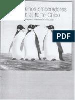 Los Pinguinos Emperadores Llegan Al Norte Chico
