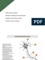 Neuronas y Sinapsis
