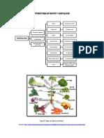 Estructura de Frutos y Hortalizas
