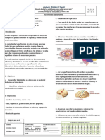 Ga-fr-10 Actividades Pedagogicas Lab Cerebro