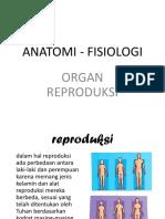 An - Fis Reproduksi