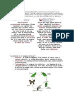 Insect a Rio