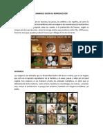 Animales Según Su Reproducción
