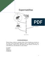 B. Gimnospermas