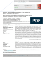Anatomia, Fisiologia e Neurobiologia da nocicepção