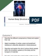 Human body revision notes
