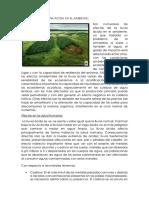 Efectos de La Lluvia Acida en El Ambiente