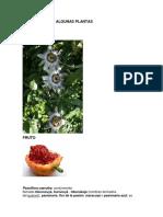 Descripción de Algunas Plantas