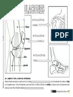 sistema-locomotor-articulaciones.pdf