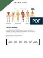 Los sistemas del cuerpo humano.docx