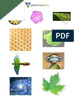 2-Formas Naturales Trazos Geo(2)