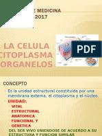 CELULA CITOPLASMA ORGANELOS HISTOLOGIA.pptx