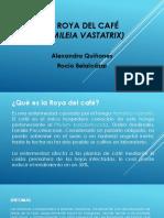 La Roya Del Café