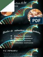 Niveles de estructura de las proteínas (1).pptx