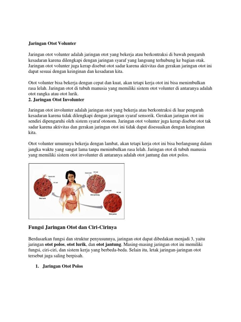 Cara Kerja Otot Polos Lurik Dan Jantung - Kumpulan Kerjaan