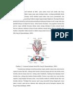 Anatomi Tiroid
