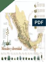 Poster - Agave, Mezcales y Diversidad p1